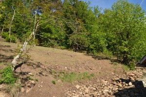 Beim Anlegen der neuen Marillenplantage mussten viele Steine entfernt werden.